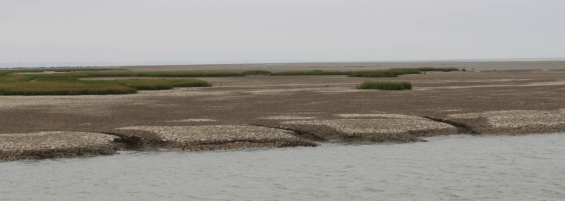 Paysage de la baie de l'Aiguillon - ©P.Migaud / FDHPA17