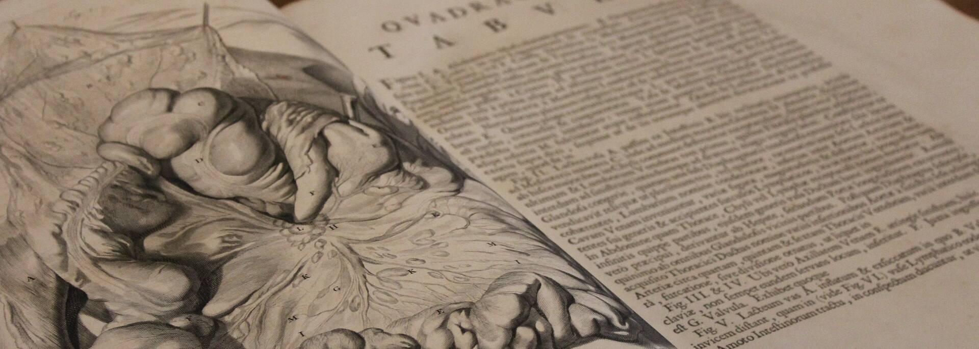 Croquis d'anatomie de l'époque - ©P.Migaud / FDHPA 17