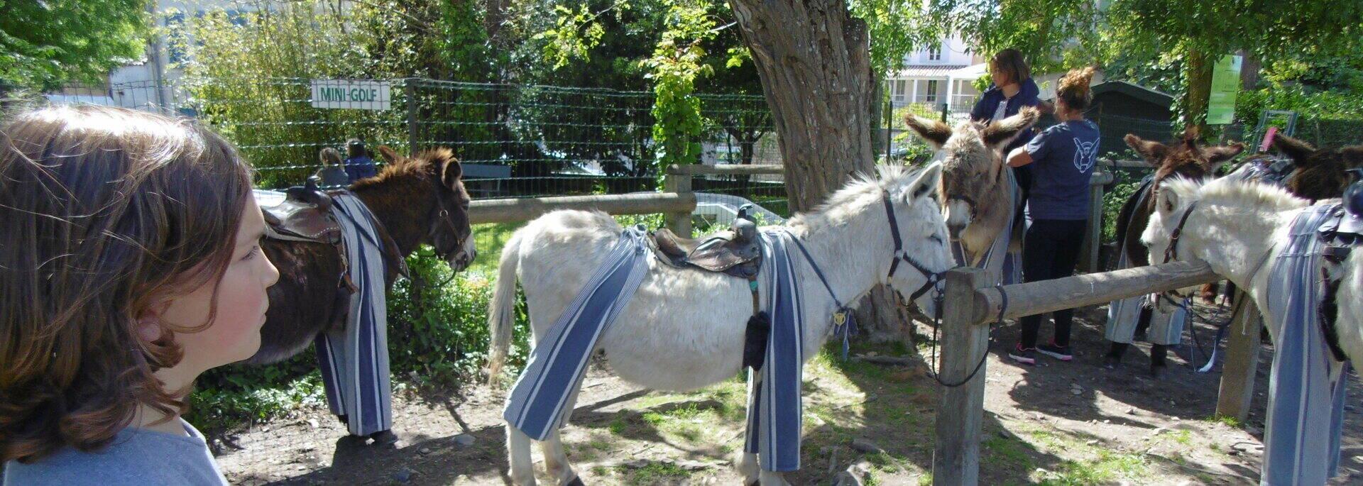 Balade à dos d'âne ©FDHPA 17