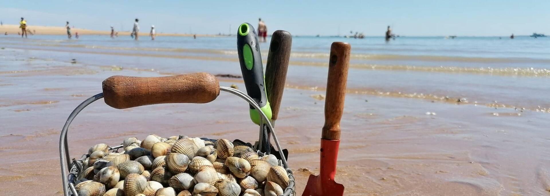 Pêche à pied sur l'estran - panier