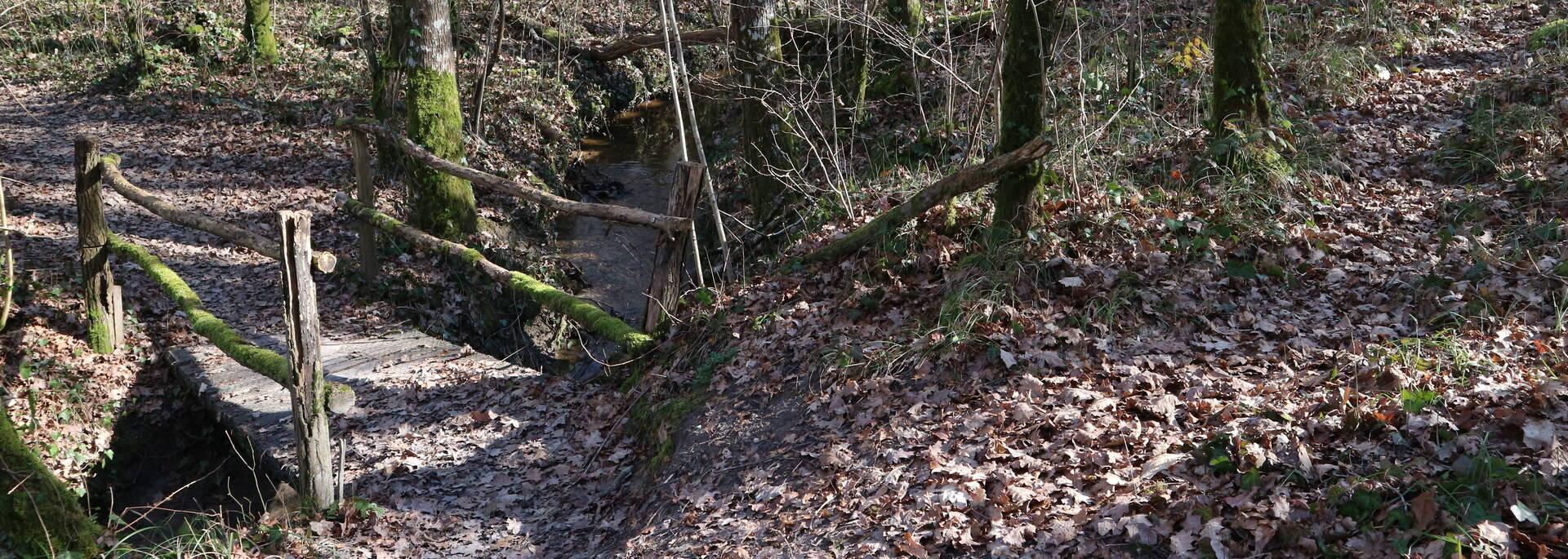 La traversée du sous-bois - © Christelle Lamothe / FDHPA 17