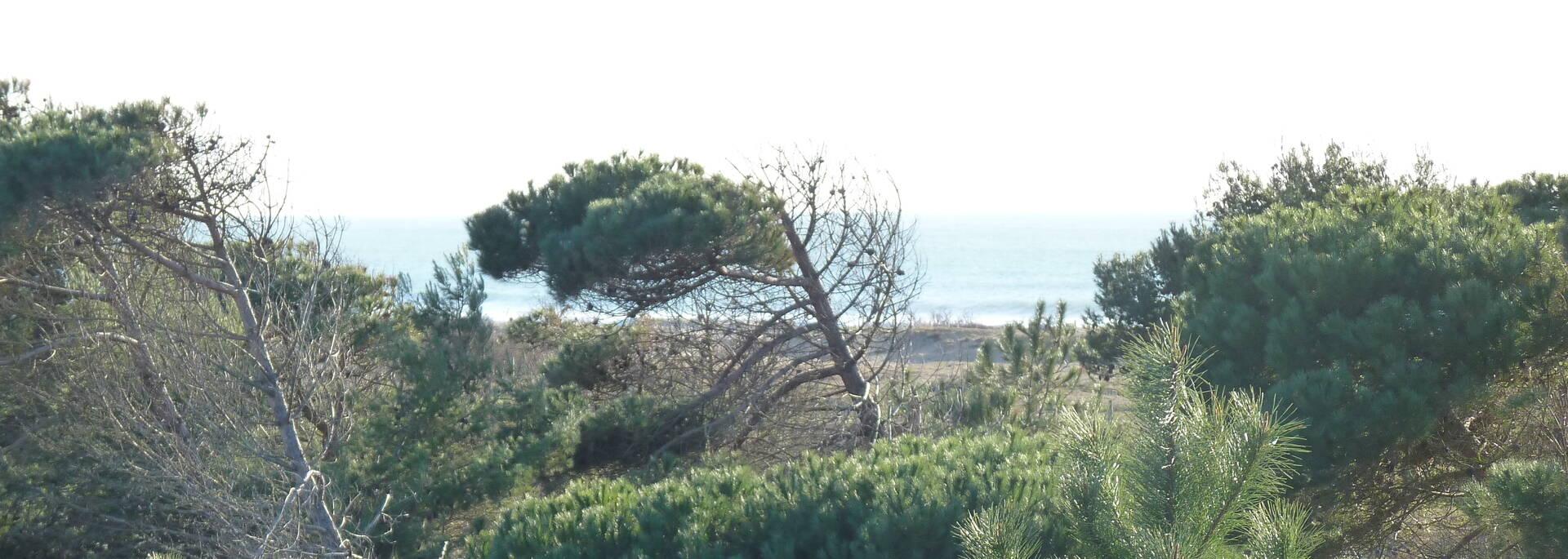 Accès à la plage de Boyardville