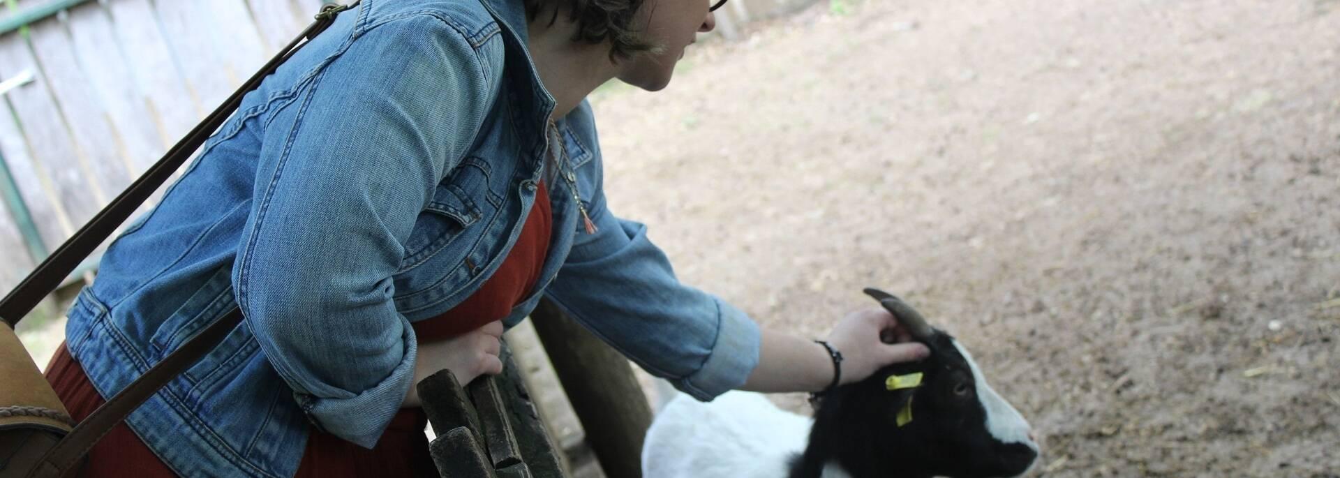 Rencontre avec les biquettes au Zoodyssée - ©P.Migaud /FDHPA17