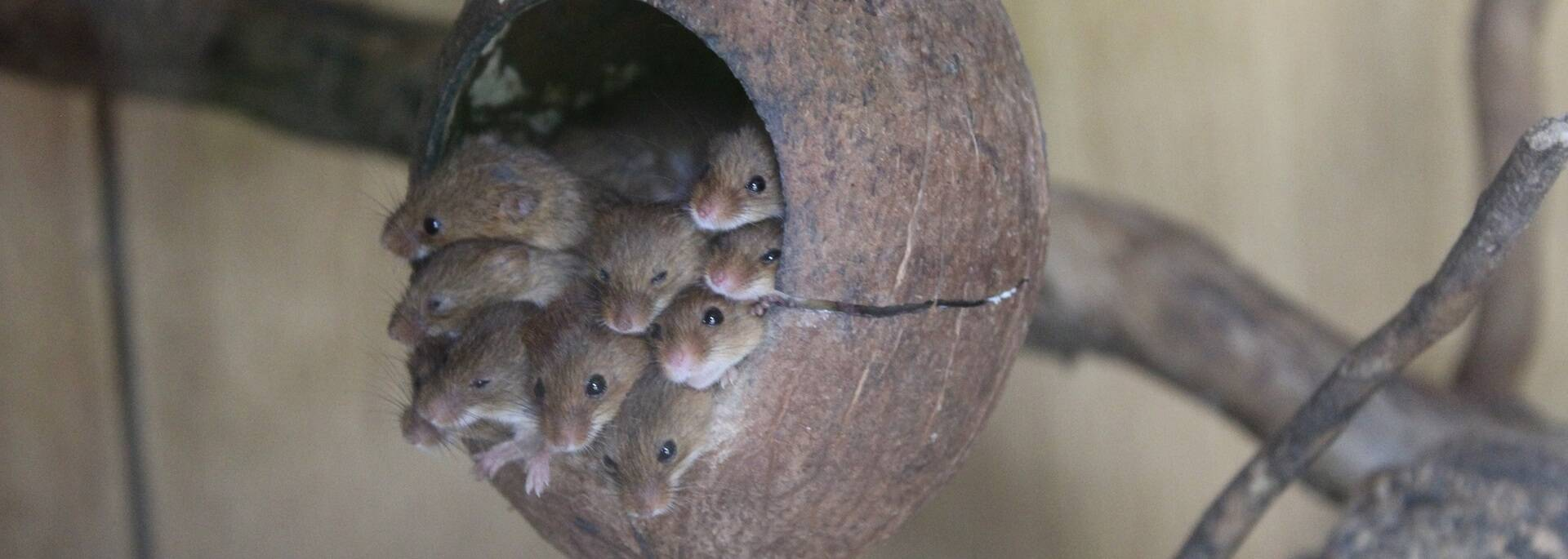Famille de rongeurs du Zoodyssée - ©P.Migaud / FDHPA17