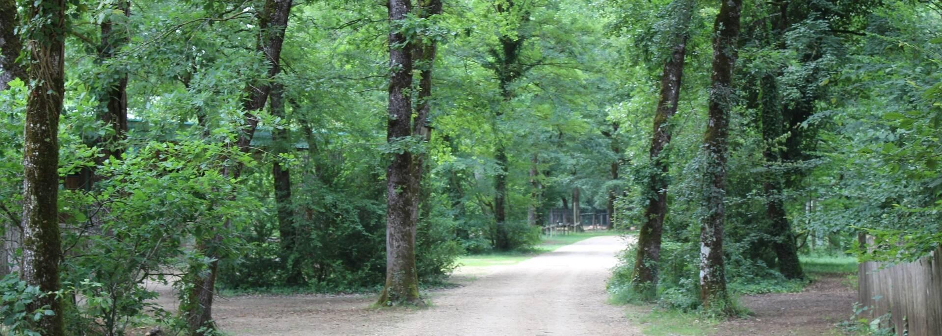 Zoodyssée : 30 hectares d'une nature préservée - ©P.Migaud / FDHPA17