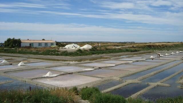 Vue les sur marais salants à Loix en Ré - ©S.Nadouce / Charentes Tourisme