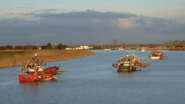 Bateaux de pêcheurs sur la Sèvre Niortaise - ©P.Migaud FDHPA17