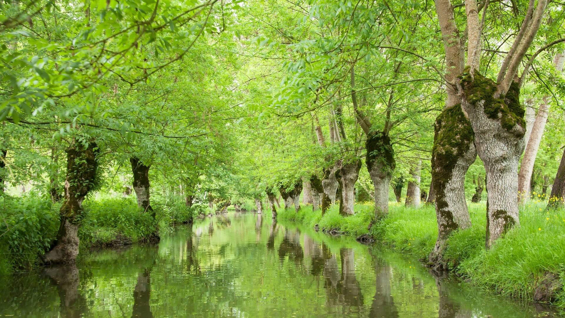 Vue d'un canal du Marais Poitevin - ©Shutterstock