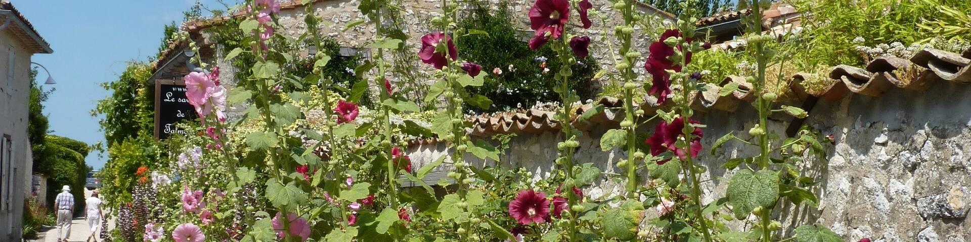 Roses trémières dans les rues de Talmont sur Gironde - ©P.Migaud / FDHPA17