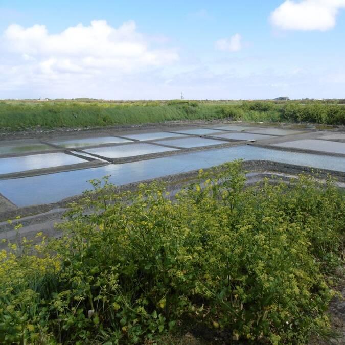 Vue sur les marais salants de l'île de Ré - © V.Baumard / FDHPA17