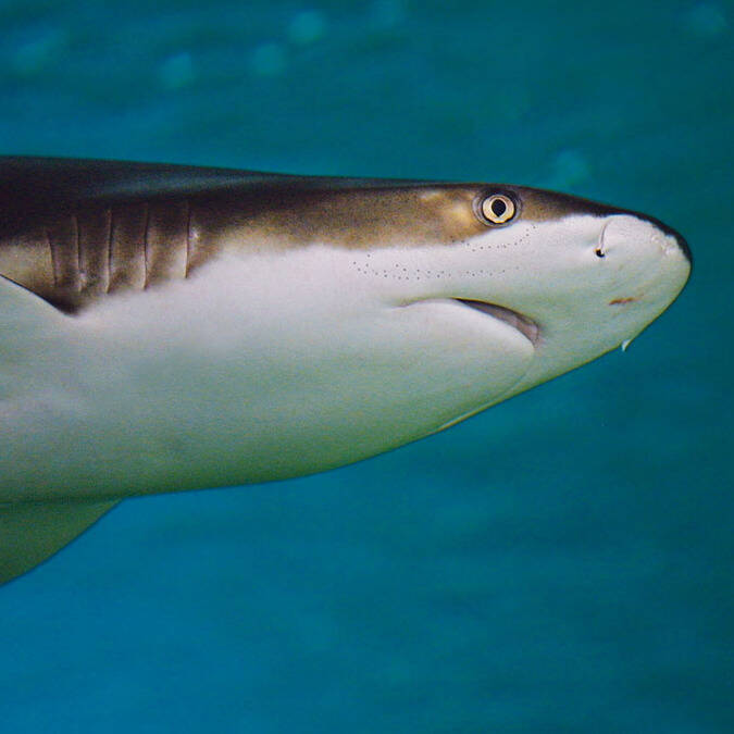 Les requins de l'Aquarium de La Rochelle © Aquarium La Rochelle
