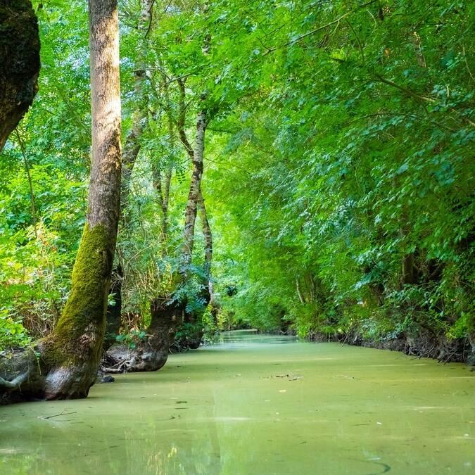 Canaux dans le Marais Poitevin - ©Shutterstock