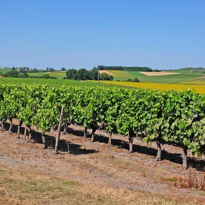 Cognac, au cœur d'un vignoble réputée - ©Shutterstock