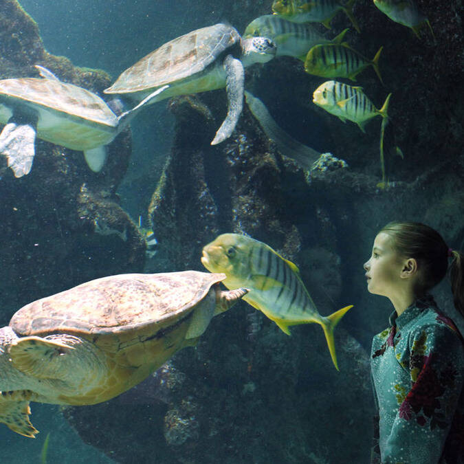 Bassin des tortues - ©Aquarium La Rochelle
