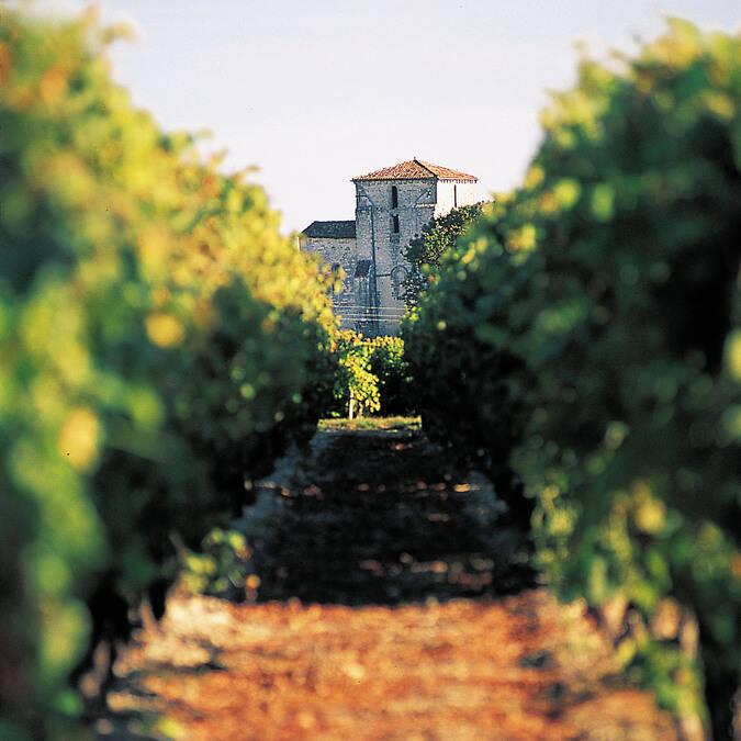 église romane dans les vignes - ©Charentes Tourisme