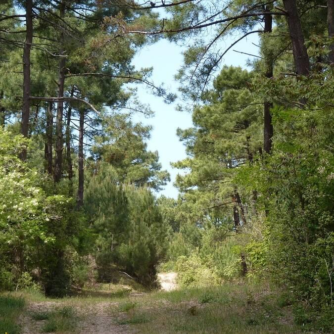 Forêt de la Coubre - ©P.Migaud / FDHPA17